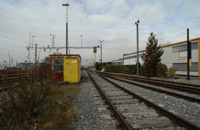 Malley - Copyright : F. Werren 2006